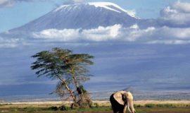 8 Days Mt Kilimanjaro Shira Route